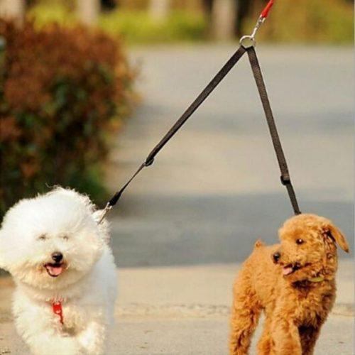 מפצל רצועת כלבים