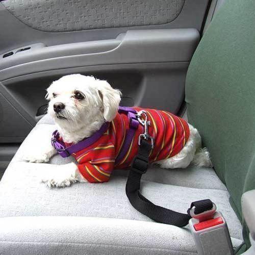 חגורה לכלב ברכב