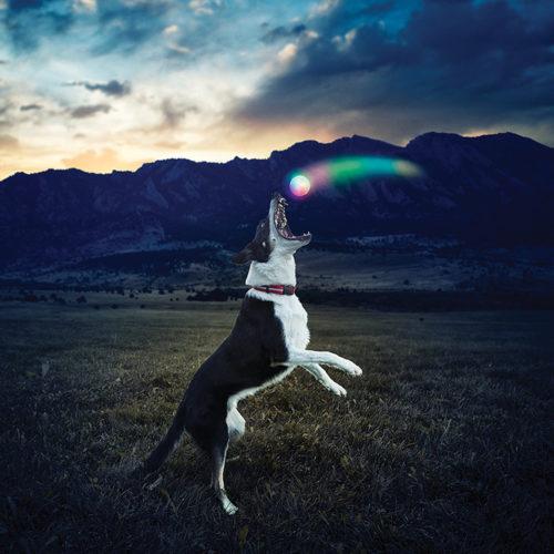 כדור לד זוהר למשחק בלילה עם הכלב