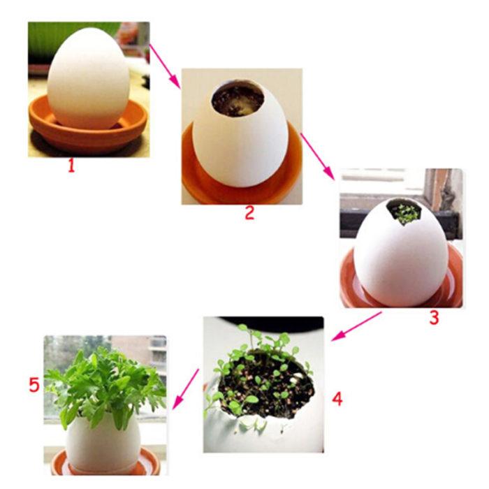 עציץ יצירתי בצורת ביצה