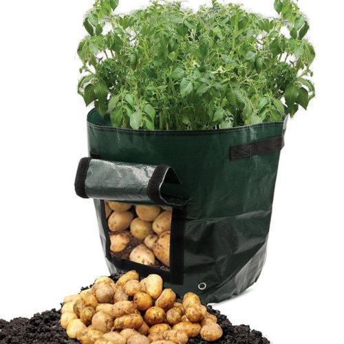 שק גידול ירקות שורש עם פתח קטיפה ללא פגיעה בצמח