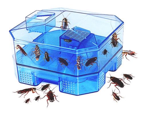 מלכודת לתפיסת תיקנים וחרקים נוספים ללא חומרי הדברה