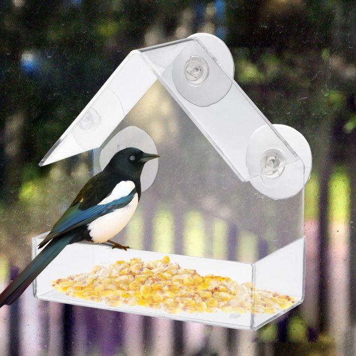 כלי נתלה להאכלת ציפורים
