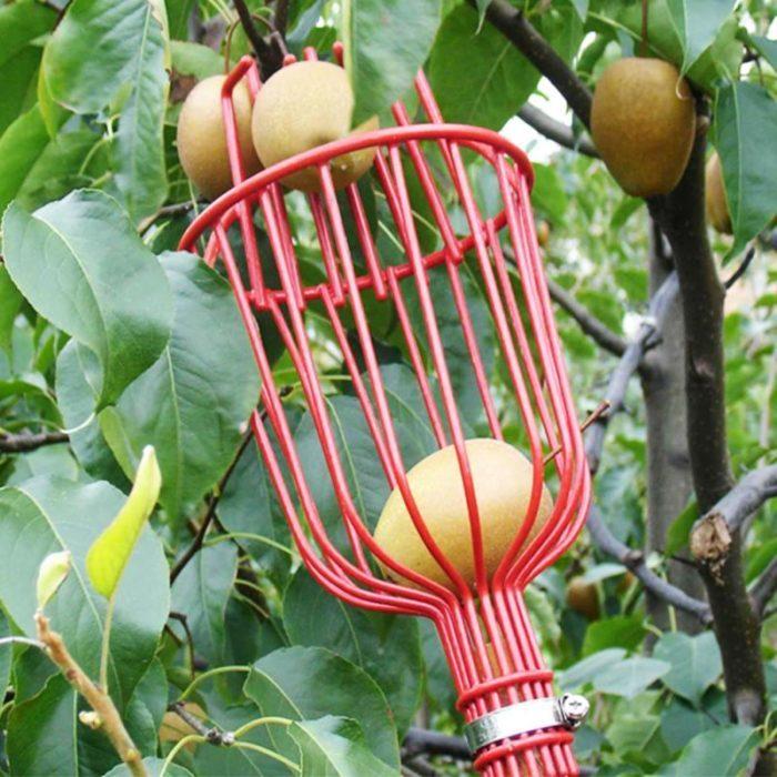 סל נוחות לקטיף ואיסוף פירות מהעץ בקלות