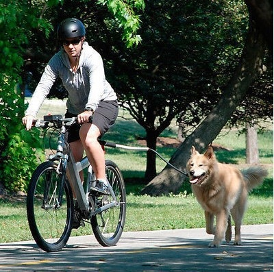 רצועה לכלב המתחברת בקלות לאופניים