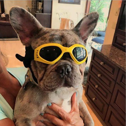 משקפי שמש לכלבים לסינון קרינת UV