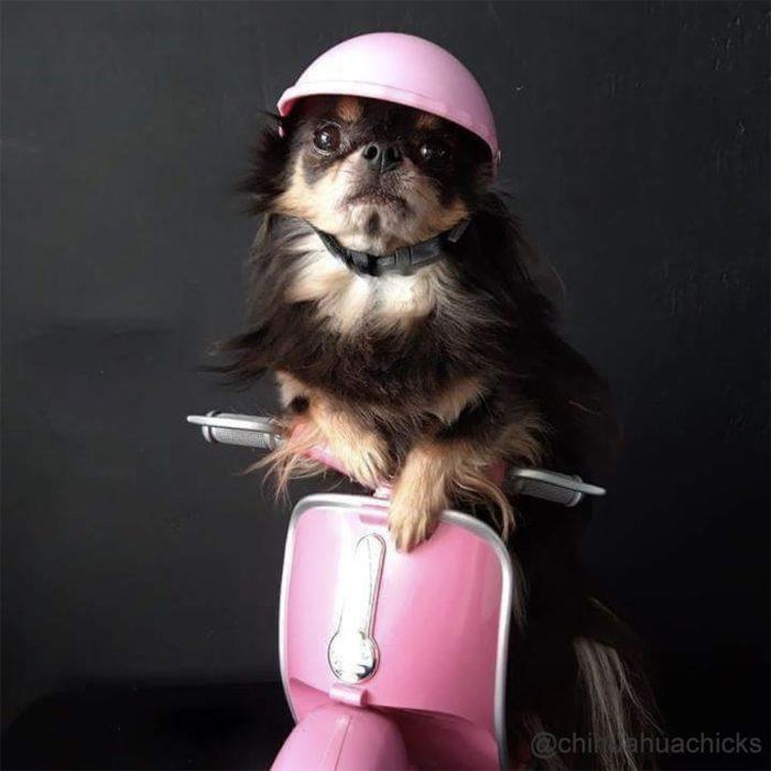 קסדת רכיבה לכלבים עם משקפי הגנה