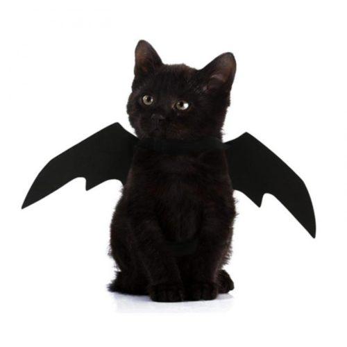 תחפושת כנפי עטלף לחתול