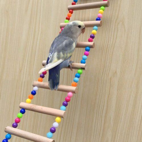 סולם חרוזים לציפורים ותוכים